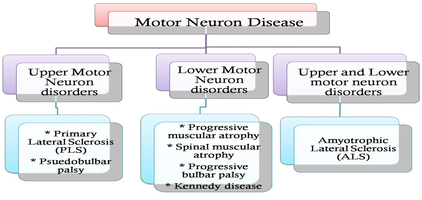 types of mnd
